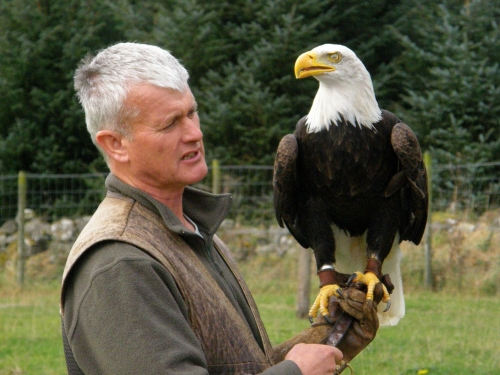 WhiteTailed Eagle at Huntly Falconry